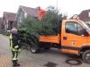 Weihnachtsbaumsammlung Bild 1
